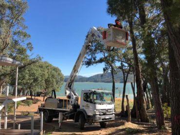 Tree services